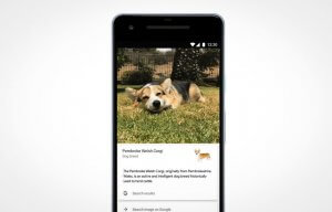 Google Lens Identify Dog and Cat Breeds